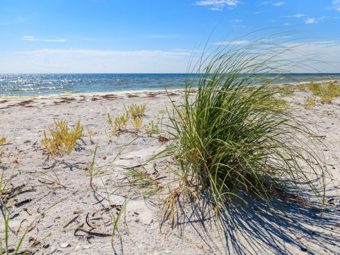 Pristine white beach from Florida Panhandle state parks. View of the ocean with grass springing from the sand.