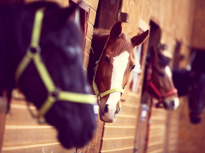 Color shot of some horses in a stable | Horseback riding in Santa Rosa Beach