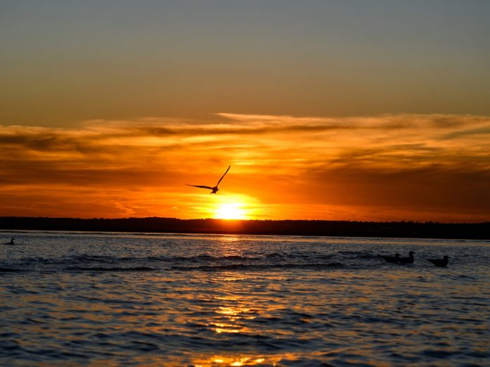 Bird flying over the ocean at sunset on 30A